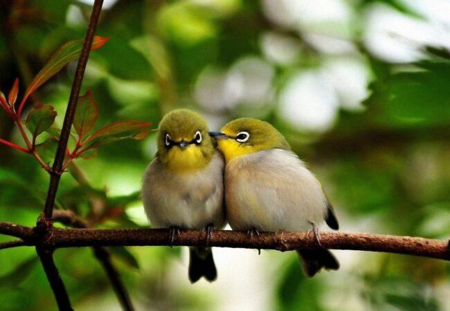Ptički se ženijo, lahko se tudi crkljajo